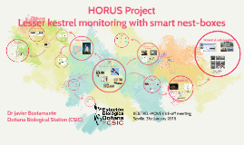 HORUS project, Lesser Kestrel Monitoring with smart nest-boxes