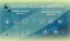 DIVISIÓN CELULAR MEIÓTICA