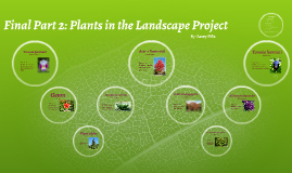 Final Part 2: Plants in the Landscape Project