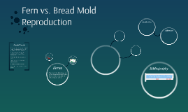 Fern vs. Bread Mold Reproduction