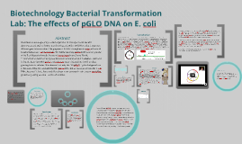 a lab report paper on pglo bacterial transformation kit essay Lab 2 enzyme catalysis  6-i bacterial transformation key concepts i concept 1:  exercise 3: place the stages of transformation in order.