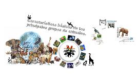 Copy of Características básicas de los principales grupos de animales.