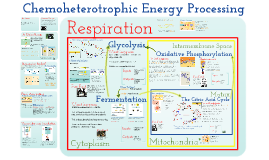 AP Biology in Focus Chapter 7: Cellular Respiration and Fermentation