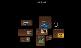 Les Baird's Tapir -Dany Roca
