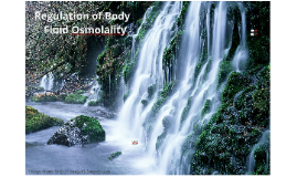 Ch. 7 Regulation of Body Fluid Osmolality