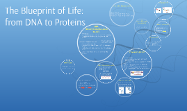 Chapter 7 The blueprint of life: from DNA to proteins