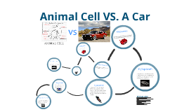 Animal Cell vs. A Car