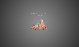 SAMR - Augmentation Phase