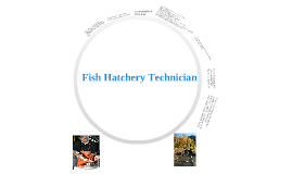 Fish Hatchery Technician