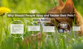 Why Should People Spay and Neuter their Pets?