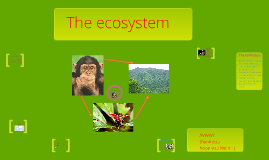 Copy of animal ecosystem of the chimpanzie