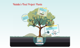 Natalie's Plant Project