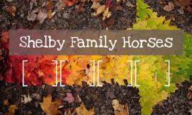 Shelby Family Horses