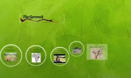 The Gerenuk
