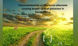 Copy of Potato