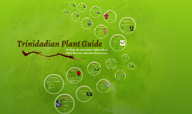 Trinidadian Plant Guide