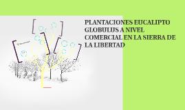PLANTACIONES EUCALIPTO GLOBULUS A NIVEL COMERCIAL EN LA SIER