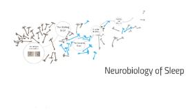 WCU Neurobiology of Sleep