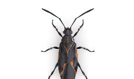 Bug Graphic Organizer