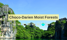 Choco-Darien Moist Forests