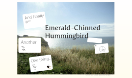 Emerald-Chinned Hummingbird