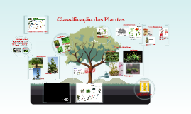 Copy of Classificação das  Plantas
