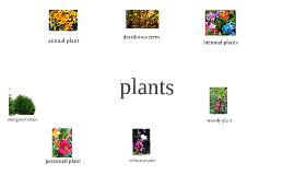 plants for ag.