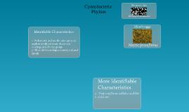 Cyano Bacteria