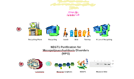 NDST1 Purification for Mucopolysaccharidosis Disorders (MPS)