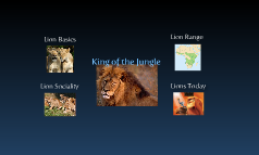 Copy of Lions