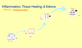 Inflammation, Tissue Healing, and Edema
