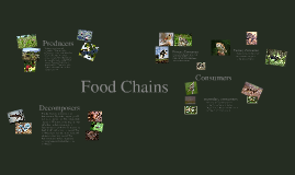Copy of Food Chains