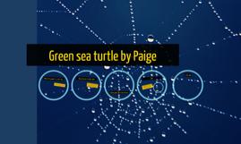 Copy of Copy of Green sea turtle