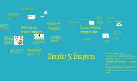 CIE  IGCSE Enzymes