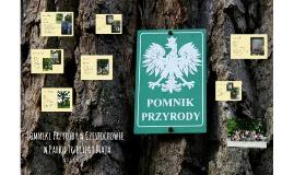 Pomniki Przyrody w Częstochowie w Parku Trzeciego Maja