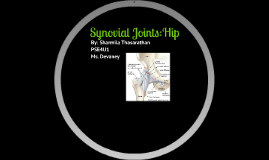 Synovial Joints:Hip