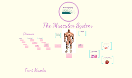 Copy of The Muscular System