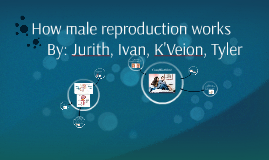 How Male Reproduction Works