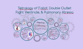 tetralogy of fallot double outlet right ventricle amp pulmon tetralogy of fallot double outlet right ventricle amp pulmon by michelle matysik on prezi