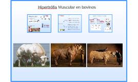 Hipertrófia Muscular en bovinos