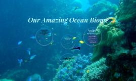Our Amazing Ocean Biome