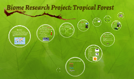 Biome Research Project: Tropical Forest