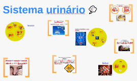 Copy of Sistema urinário