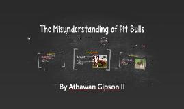 The Misunderstanding of Pit Bulls