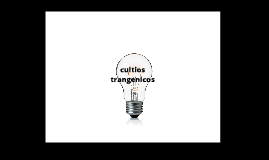 consumo humano cultivos transgenicos