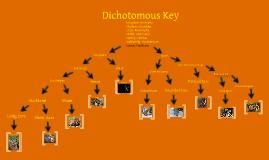 Dicotumus Key