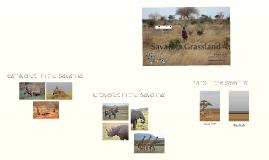 Savanna Grassland