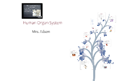 Copy of Marlaina Rallo, Human Organ System