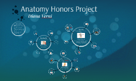 Anatomy Honors Project
