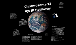 Copy of Chromosome 13